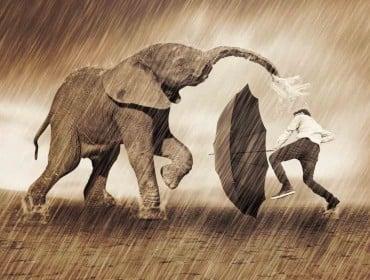 elephant-335754_1920
